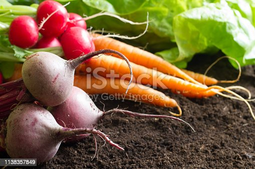 Fresh raw spring vegetables harvest in the garden organic background concept closeup