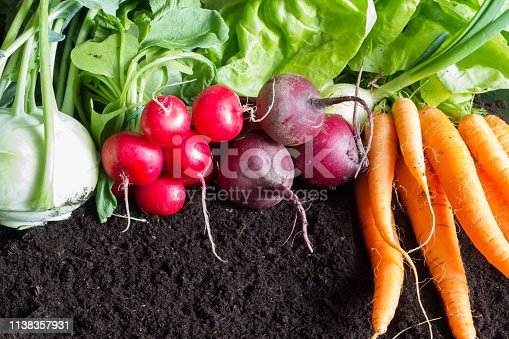 istock Fresh raw spring vegetables harvest in the garden organic background concept 1138357931