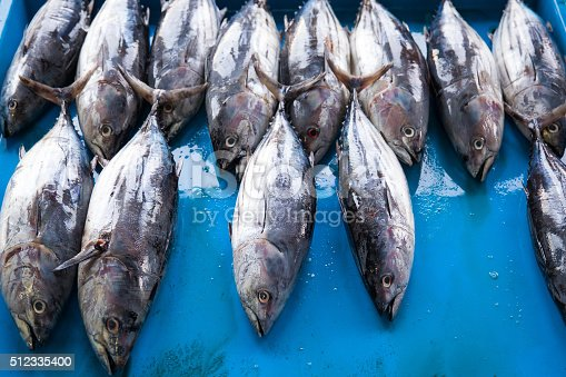 635931692 istock photo Fresh raw tuna fish in market 512335400