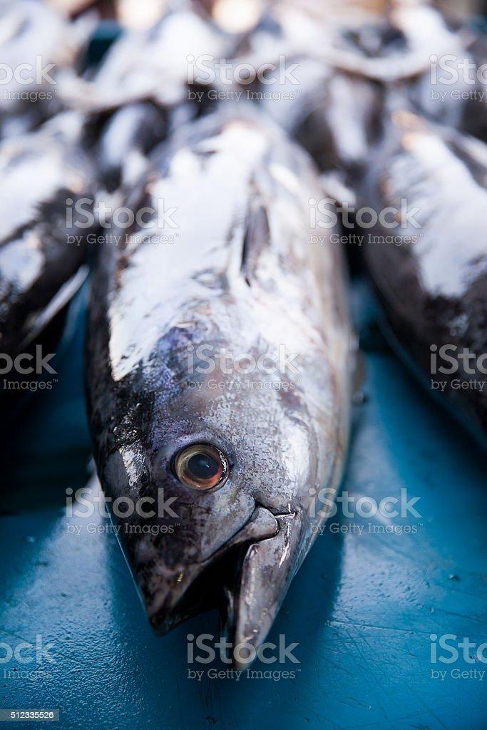 Fresh raw tuna fish in market stock photo