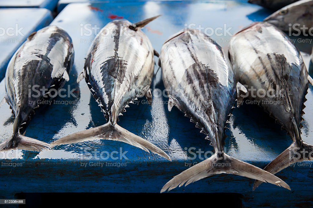Fresh raw tuna fish in market stock photo