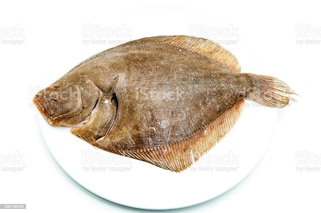 Rombo Pesce Crudo Fresco Sul Piatto Bianco Fotografie Stock E
