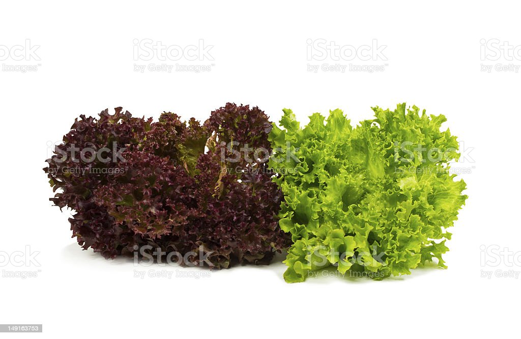 Fresh red and green lettuce stock photo