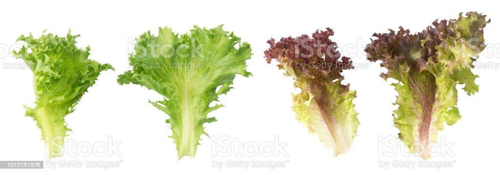 Feuilles de laitue chêne rouge frais et vert - Photo