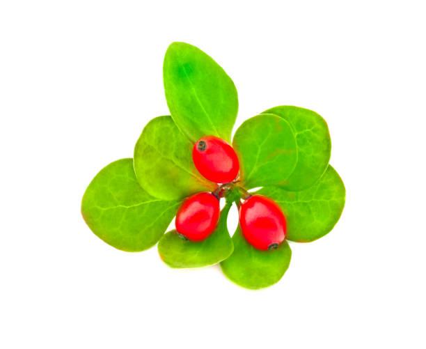 Frische rote Beeren Berberitze mit grünen Blättern isoliert auf weißem Hintergrund. – Foto