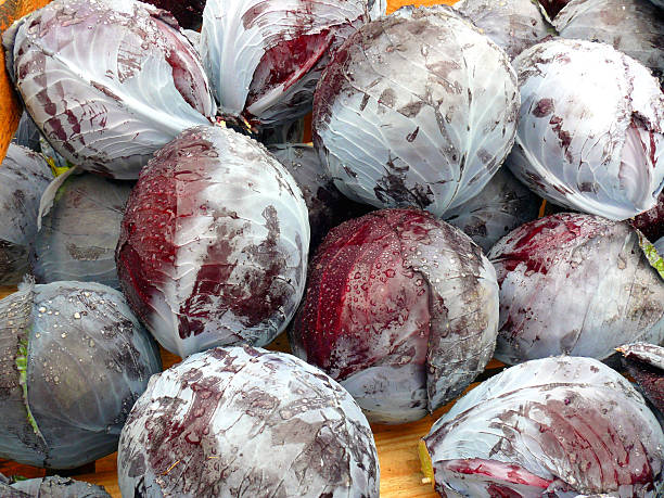 Fresh red cabbage stock photo