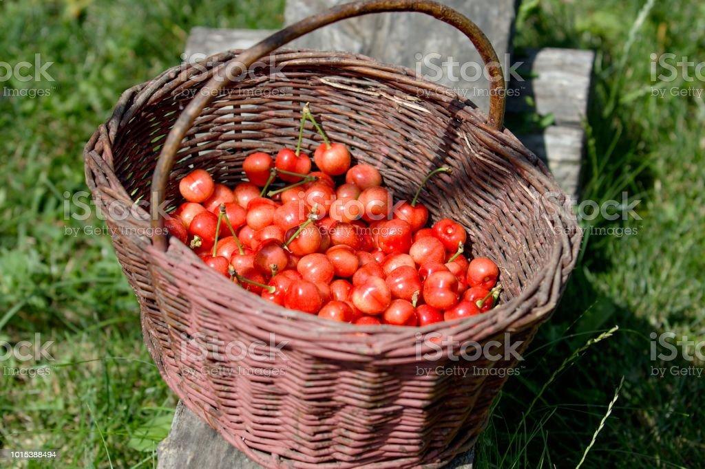 fresh red cherries in wicker basket stock photo