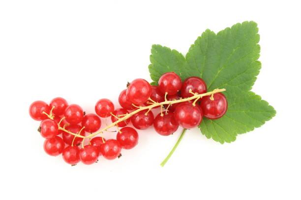 frutas vermelhas frescas da passa de Corinto isoladas em um fundo branco - foto de acervo