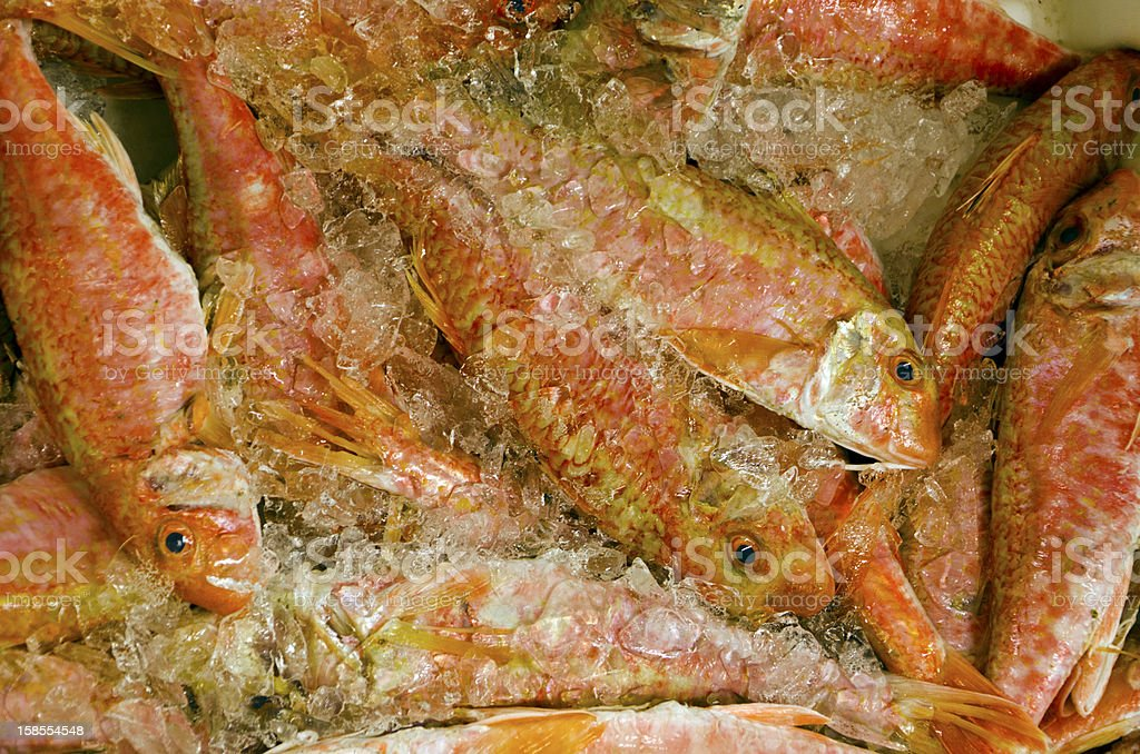 Fresh Red Mullet on ice at the fish market royalty-free stock photo