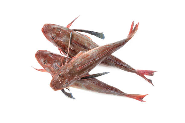 fresh red mullet on white stock photo