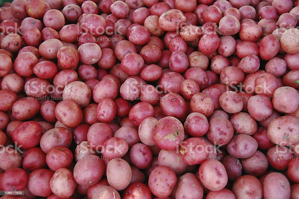 fresh red potatoes stock photo