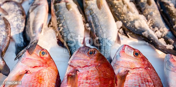 Pile of fresh Northern Red Snapper fish, Lutjanus campechanusfish, for sale on the fishmonger, outdoor seafood market.