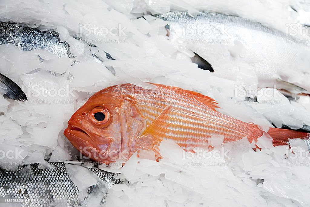 Fresh Red Snapper on Ice royalty-free stock photo