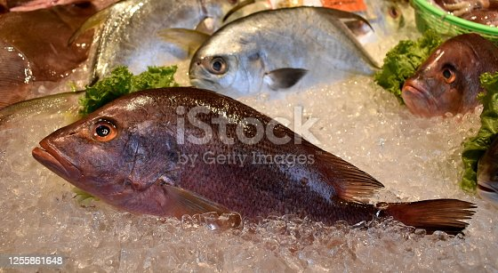 Fresh red snapper on sale at a seafood restaurant
