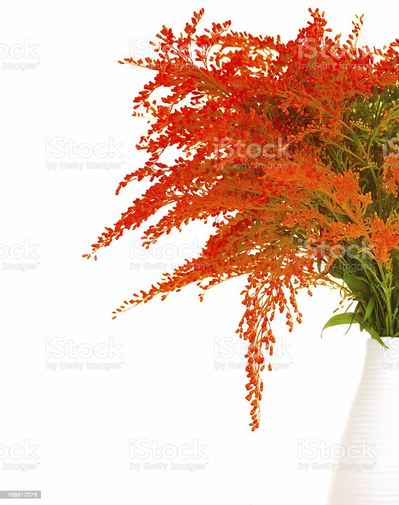 Fresh red spring flowers royalty-free stock photo