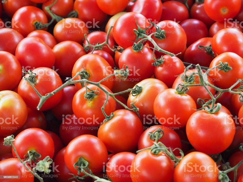 fresh red tomatoes with green branches - Royalty-free Agriculture Stock Photo