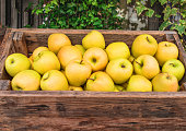 Fresh rganic Apples in a wooden box. Autumn harvest concept.  Top view\