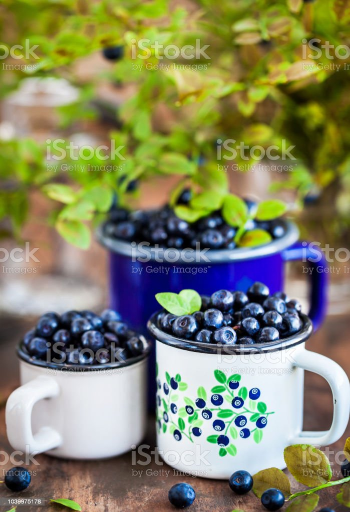 Fresh ripe bluberries (bilberries) in enamel mugs stock photo