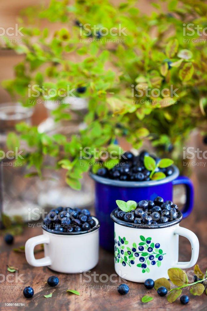 Fresh ripe bluberries (bilberries) in enamel mugs stock photo
