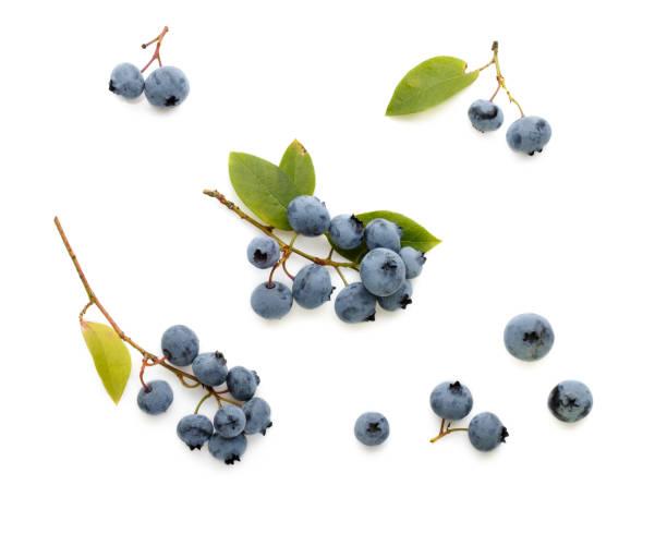 färska mogna blåbär bär och blad isolerade på vit bakgrund. topp-vy. platt låg. - blåbär bildbanksfoton och bilder