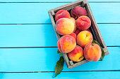 Fresh ripe apricots in a wooden box on a blue table at the garden.