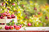 Fresh ripe red apples in wooden crate on garden table.