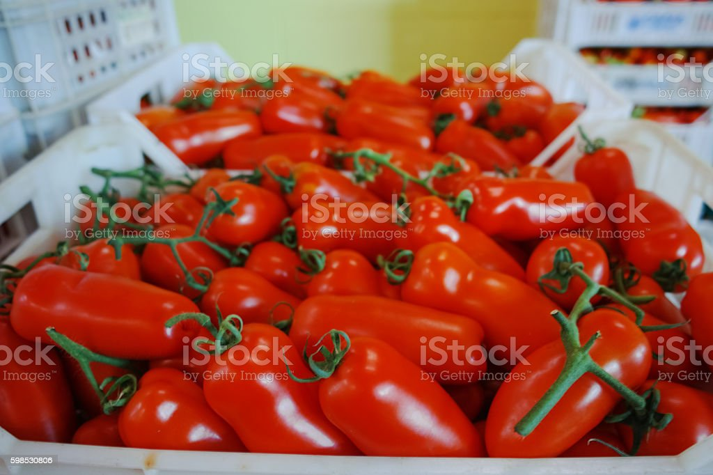 Fresh ripe red tomatoes in boxes in whole sale market photo libre de droits