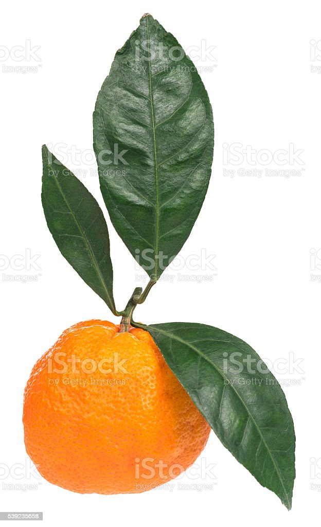 Fresh ripe tangerine royalty-free stock photo