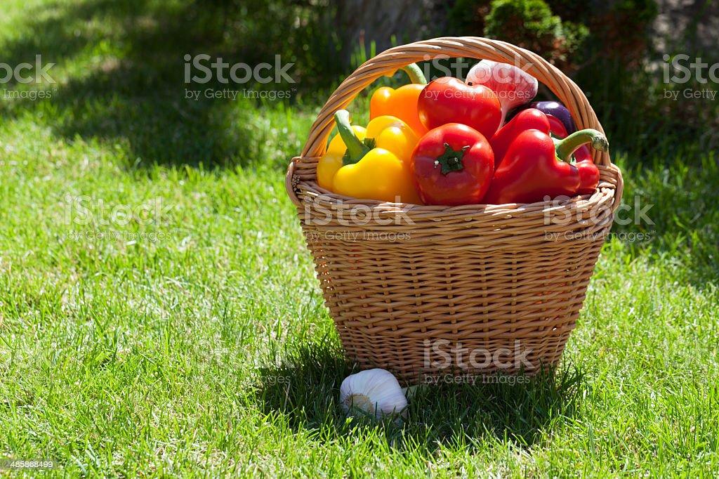 Fresh ripe vegetables in the basket stock photo