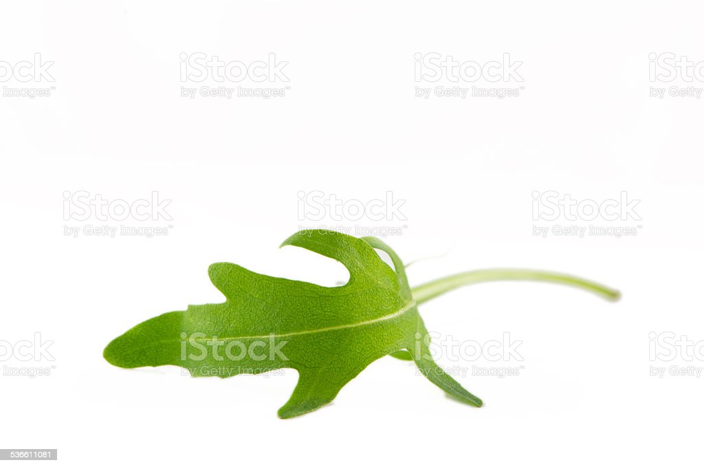fresh rocket salad on white background stock photo