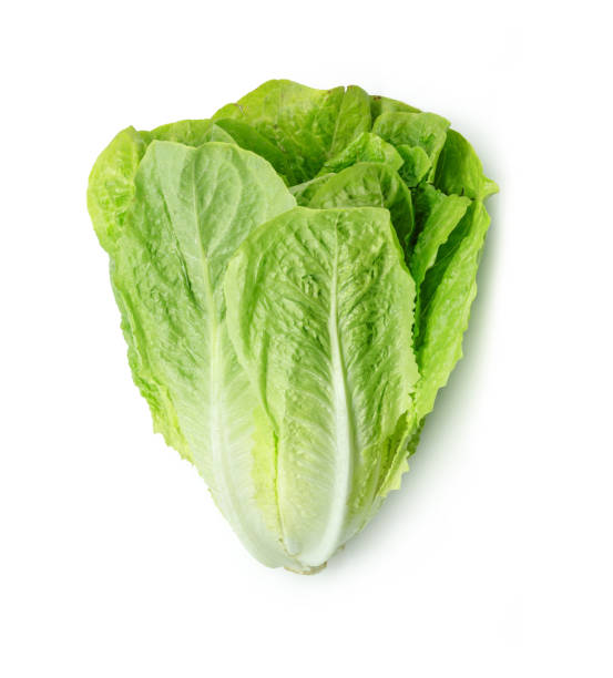 Fresh Romain Lettuce isolated on white background. Fresh Romain Lettuce isolated on white background. romaine lettuce stock pictures, royalty-free photos & images