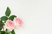 istock fresh rose flowers 1127417234