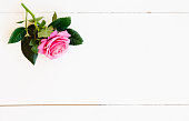 istock fresh rose flowers 1129693007