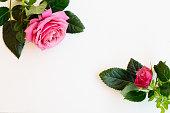 istock fresh rose flowers 1129693205