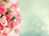 istock fresh rose flowers 1129869507