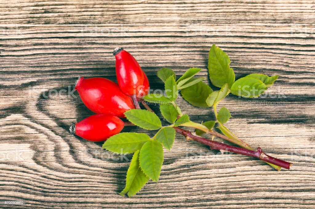 Fresh rosehip with decorative green leaves stock photo
