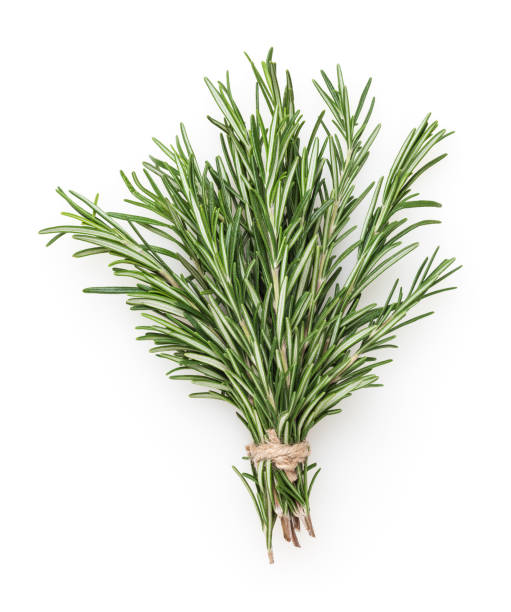 Fresh rosemary bunch isolated on white background Fresh rosemary bunch isolated on white background bundle stock pictures, royalty-free photos & images