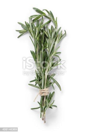 Fresh grown Rosemary.