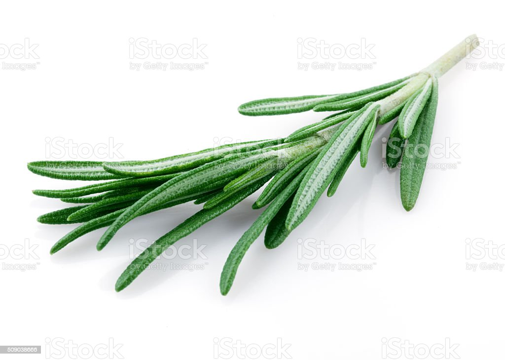 Fresh rosemary isolated on white stock photo
