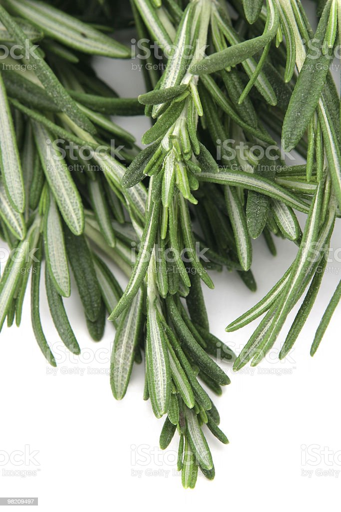 Fresh rosemary leaves royalty-free stock photo