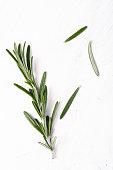 Fresh Rosemary on white background