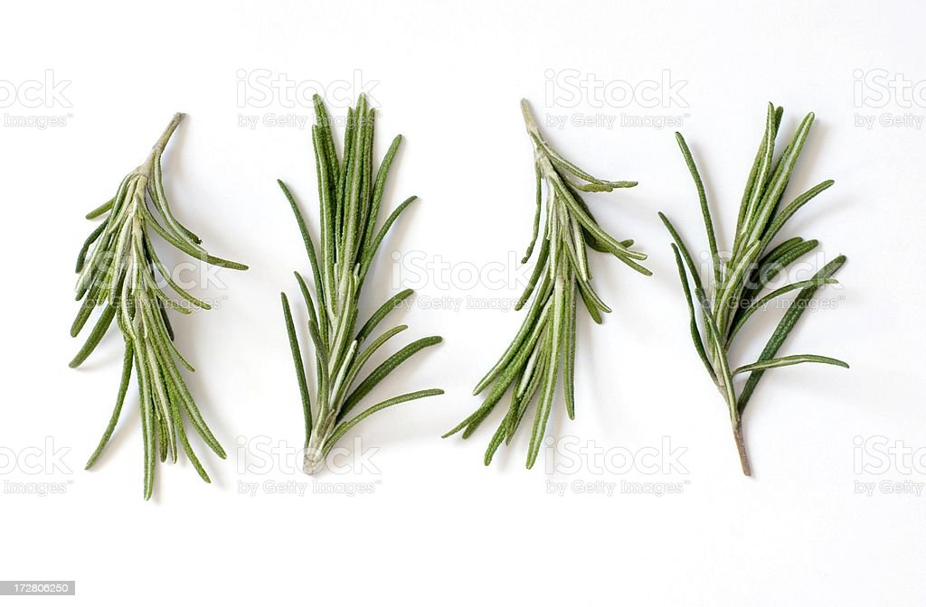 Fresh Rosemary (Rosmarinus officinalis) on White stock photo