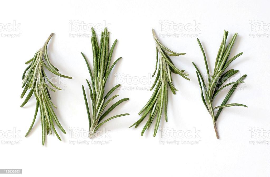 Frischer Rosmarin (Rosmarinus officinalis) auf Weiß – Foto