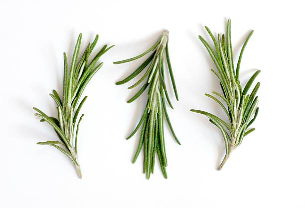 Fresh rosemary sprigs or Rosmarinus officinalis on white stock photo