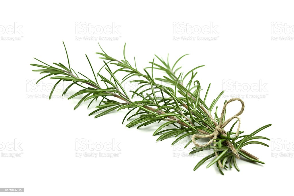 Fresh rosemary sprigs tied with twine at the base stock photo