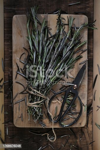 Fresh rosemary.Aromatic herbs and spices. Green rosemary and black garden shears .Rustic style.Dark mood. Spices.