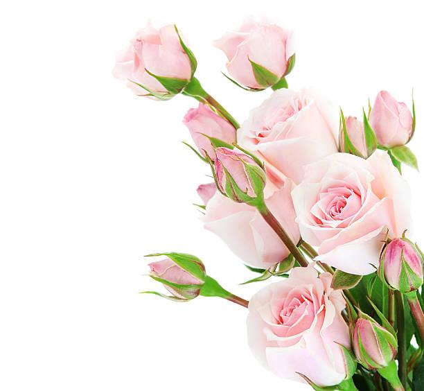 Fresh roses border picture id154204924?b=1&k=6&m=154204924&s=612x612&w=0&h=nab0v euwtqwdeocoedbj5z6cmsqtjrcwkjqbk kj9g=