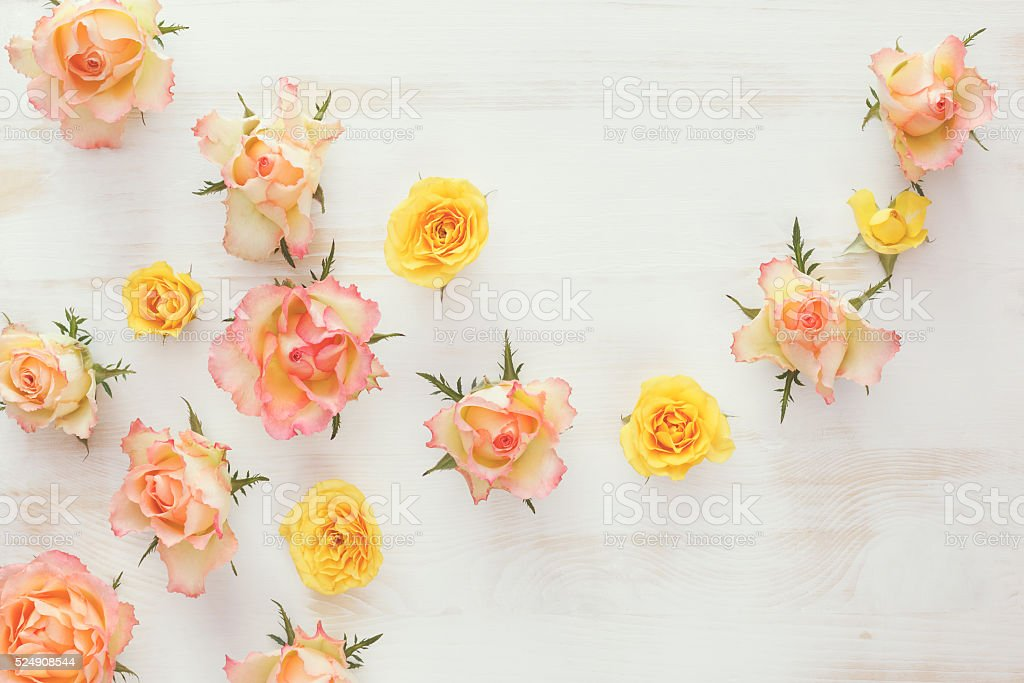 Fresh roses flower, abstract background stock photo