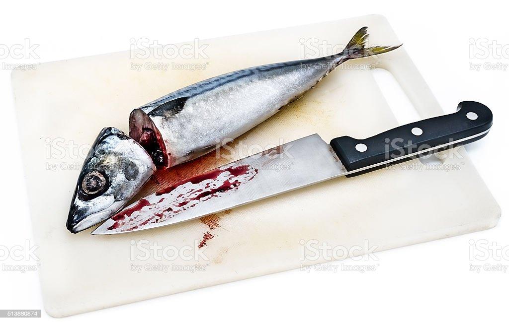 Fresh saba fish head and body stock photo