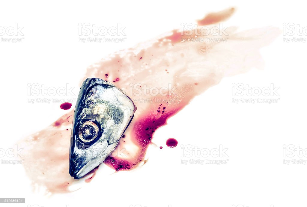 Fresh saba fish head with Dripping blood stock photo